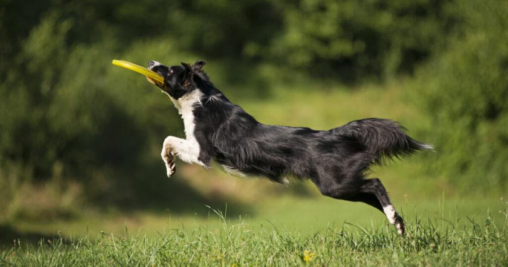 10 лучших способов заниматься с собакой