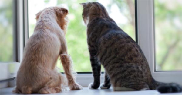 Помните домашних животных в этом Национальном месяце осведомленности о домашнем насилии
