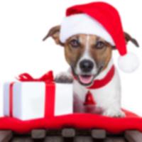 Путеводитель по подаркам к праздникам 2013 года от dog-time.ru