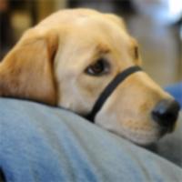 Первые собаки-терапевты окончили тюремную программу обучения в Мэриленде