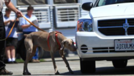 Найди это: собачий спорт — работа с носом