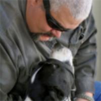Отметьте служебных собак и ветеранов, которым они помогают, в этот День ветеранов.