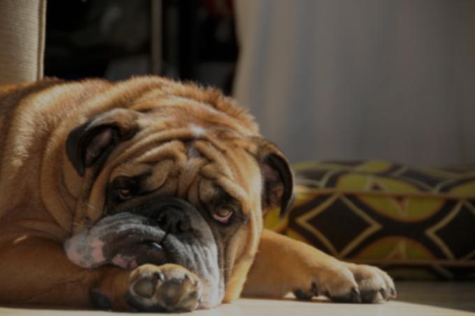 Диарея у собак: симптомы, причины и методы лечения