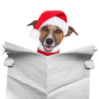 10 лучших собачьих новостей 2013 года на dog-time.ru
