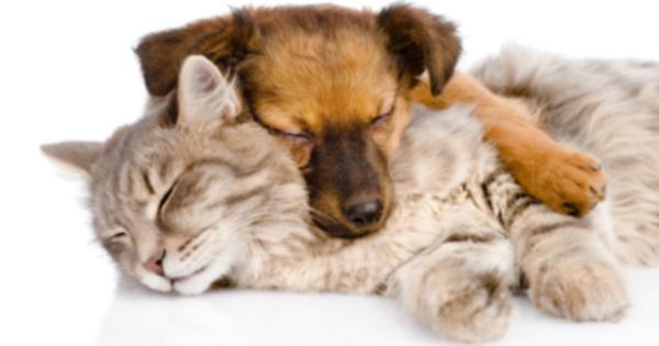Ой: отравление марихуаной среди домашних животных растет