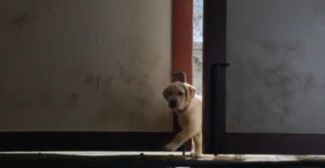 Очаровательная реклама Суперкубка «Любовь щенков» Будвайзера