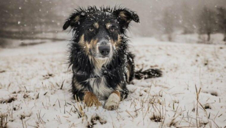 Гипотермия у собак: симптомы, причины и методы лечения