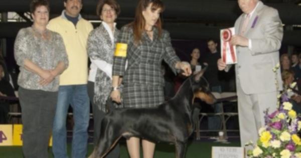 Шоу-собака обнаружила рак у хозяина