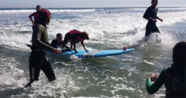 Собака-серфингист исполнила желание неизлечимо больного мальчика