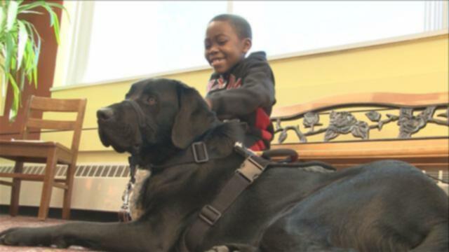 Неудачная служебная собака стала лучшим другом братьев Колорадо