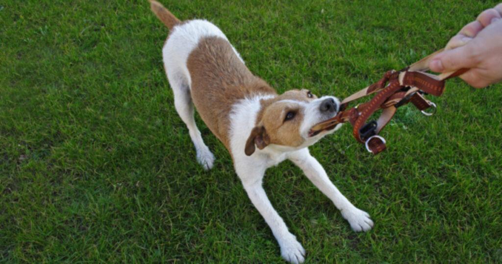 Владельцы собак: просить о помощи — это нормально
