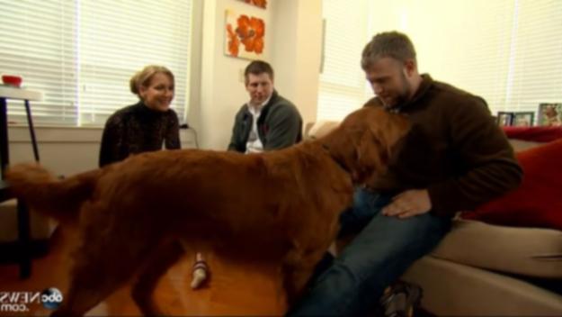 Одна собака меняет жизни двух ветеранов войны