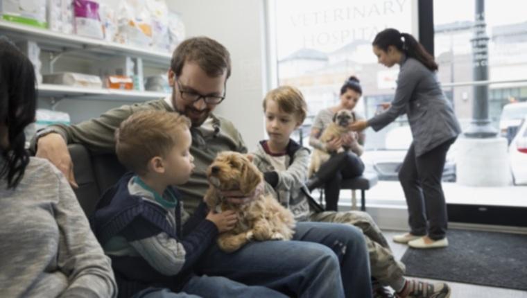 5 основных шагов при выборе хорошего ветеринара