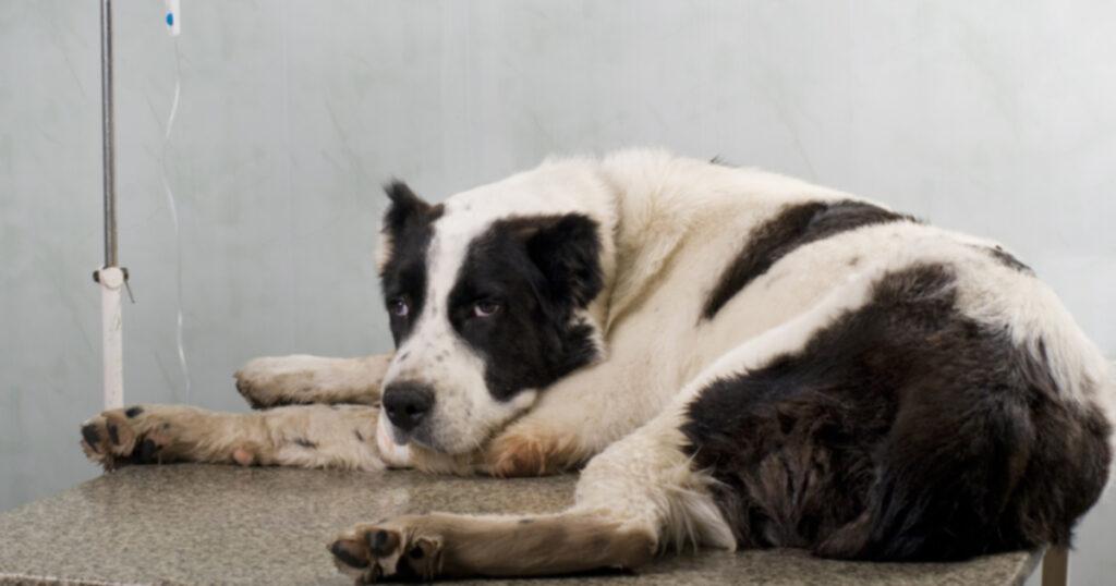Основные заболевания, общие для собак и людей