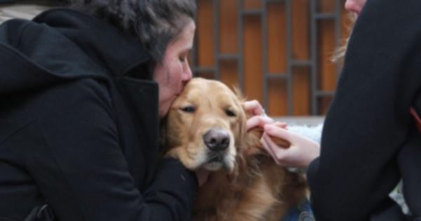 Собаки утешают Бостон, когда в понедельник начинается марафон