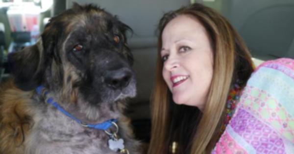 Семейную собаку якобы избавили от эвтаназии и держали для тайных переливаний крови
