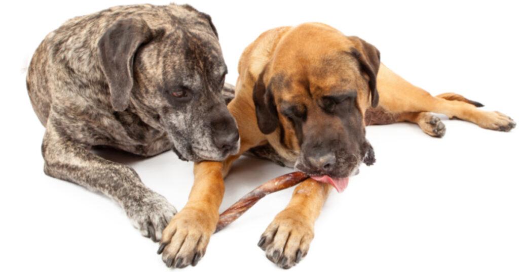 FDA сообщает, что из-за вяленого угощения погибло более 1000 собак