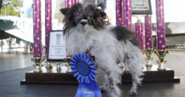Матт стал победителем конкурса самых уродливых собак в мире 2014