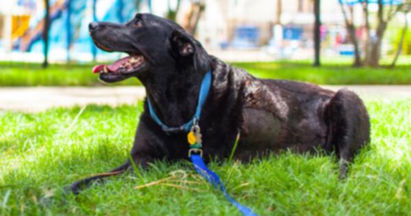 Трогательные фотографии документ последнего дня собаки