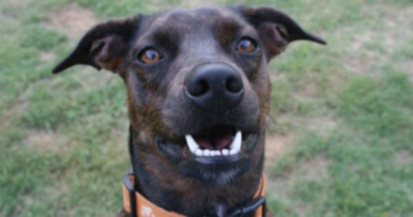 Несколько владельцев домашних животных обвиняют в смерти собак популярный профилактический препарат