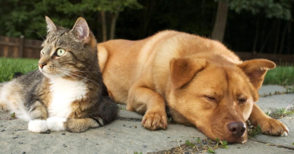 10 самых серьезных болезней домашних животных