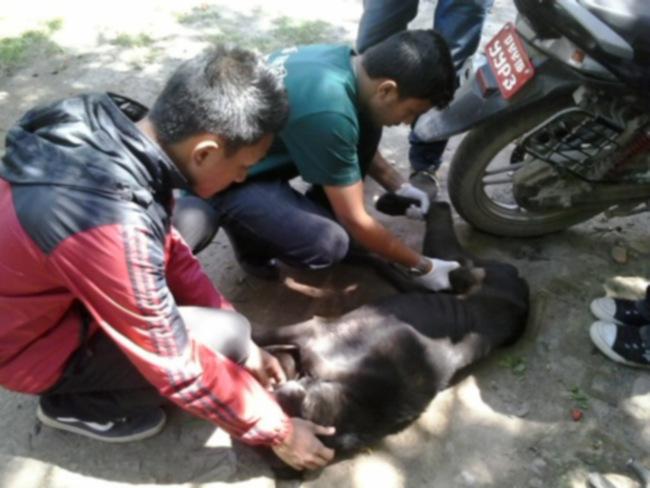 Как вы можете помочь животным, пострадавшим от сильного землетрясения в Непале