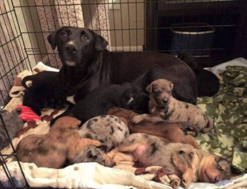 Собака-герой спасла маму и 10 больных щенков