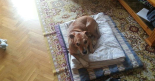 Собака подверглась эвтаназии после того, как ее владелец заразился лихорадкой Эбола
