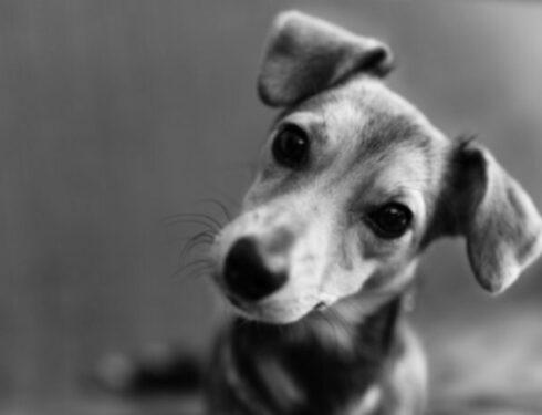 Потеря домашних животных и горе: почему это так больно?