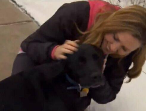 Две собаки-спасатели, которые спасли свои человеческие жизни