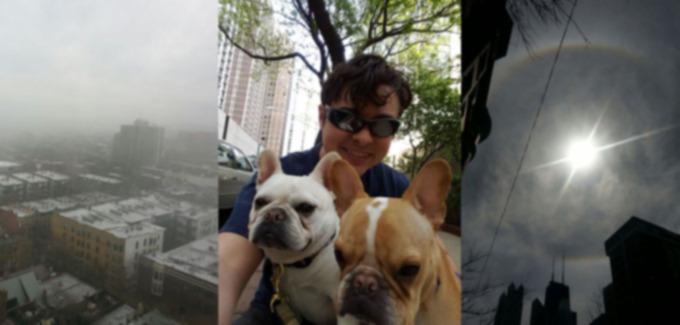 5 причин, по которым выгул собак лучше, чем ваша работа