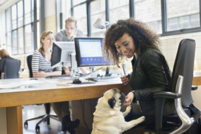 Для начальников: 5 причин, почему собаки прекрасны на рабочем месте