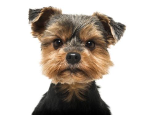 Бешеная собака! Ваша собака злится на вас?