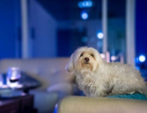 10 крошечных пород собак, которые доказывают, что большие вещи приходят в маленьких упаковках