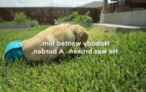 Когда парализованный мужчина принимает парализованную собаку, ничто не может его остановить