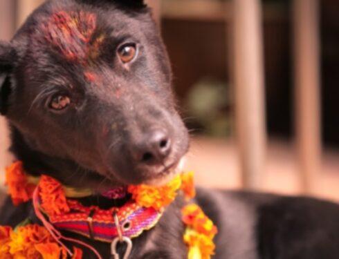 В Непале празднуют собак во время фестиваля Дивали