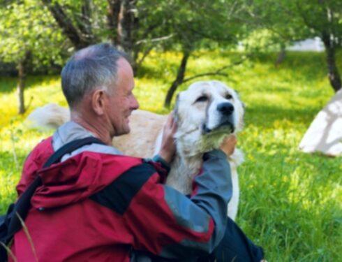 Лайфхаки для собак: 5 натуральных домашних средств от распространенных заболеваний у собак