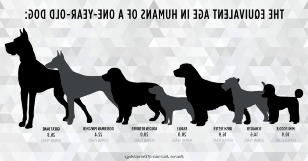 Недостатки правила семи лет: насколько точны «собачьи годы»?