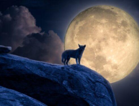 Почему собаки воют на Луну?