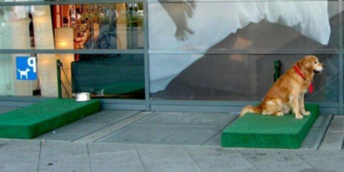 IKEA создает стоянку для собак, чтобы собакам не приходилось сидеть в горячих машинах