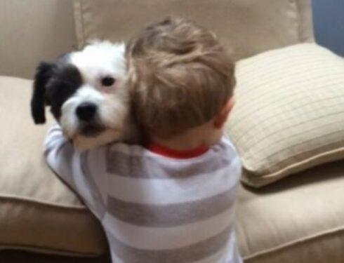 Собака не принесет, но обнимет