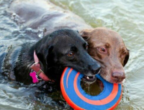 Топ-10 собак, которые любят воду