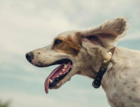 Стоимость содержания собаки