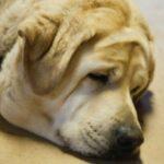 Кормление собаки с избыточным весом
