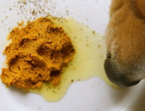 Пищевые добавки для собак
