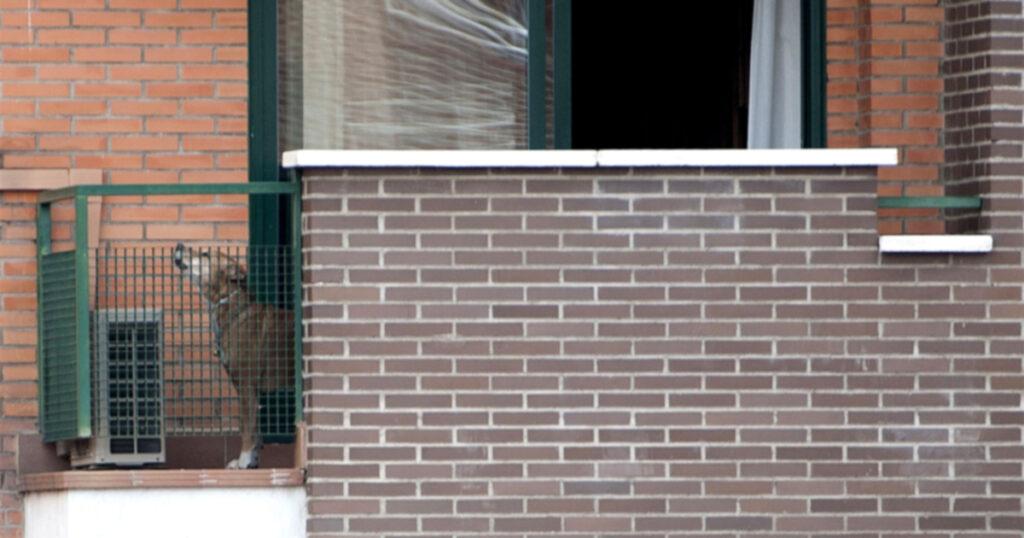 Собаки, лихорадка Эбола и гибель Экскалибура