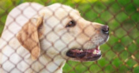Выбор собаки из приюта