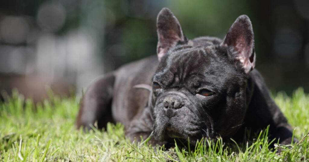 Помощь собакам с артритом?