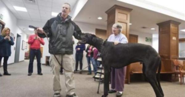 Самая высокая собака в мире скончалась