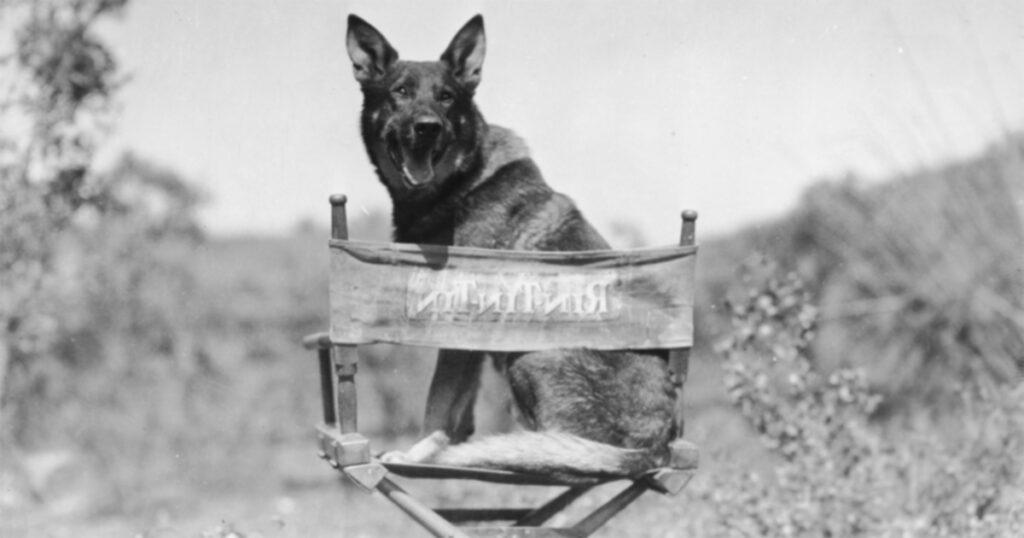 5 собак, изменивших историю